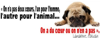 LA STERILISATION : UN ACTE DE PROTECTION ANIMALE Lamart10