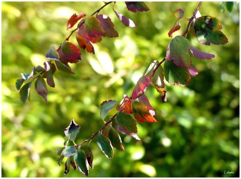 Couleurs d'automne Couleu10
