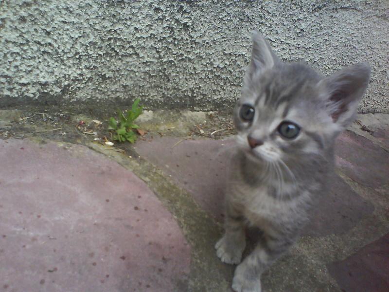 Les chats sont-ils possédés ?  Dsc00110