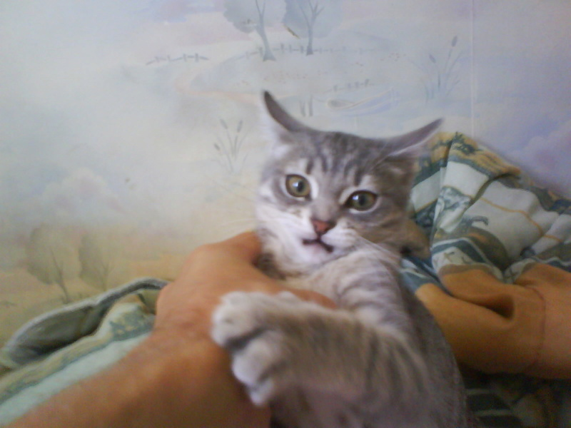Les chats sont-ils possédés ?  Dsc00210