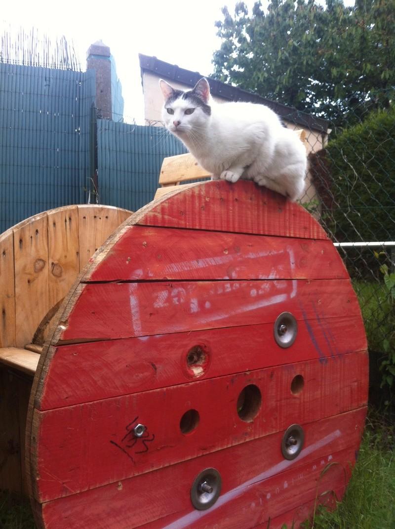 Les chats sont-ils possédés ?  Img_0111
