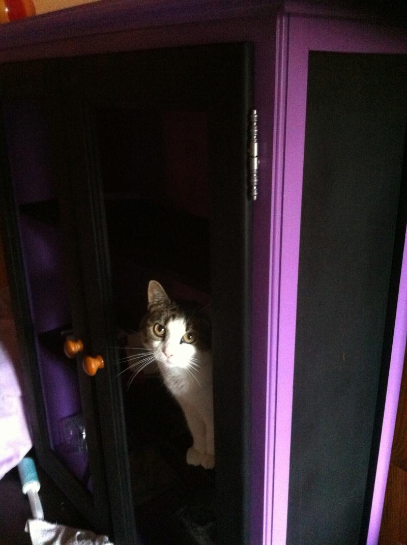 Les chats sont-ils possédés ?  Img_0711