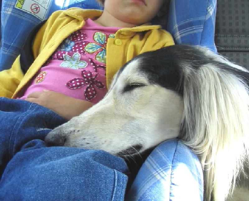 Les règles d'or d'un bon voyage avec son chien. - Page 2 Img_0038