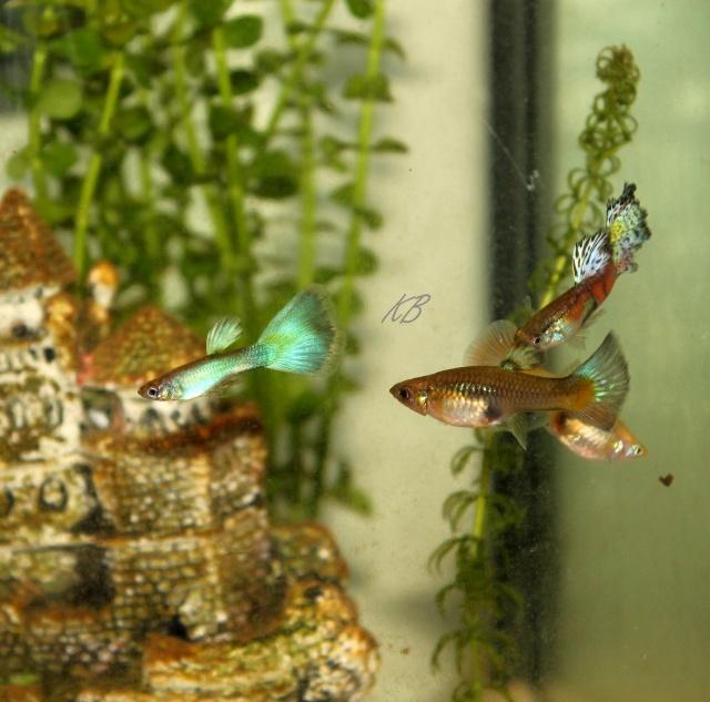 L'aquarium de Lolkaty 110