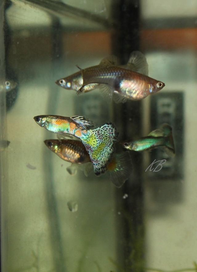L'aquarium de Lolkaty 210