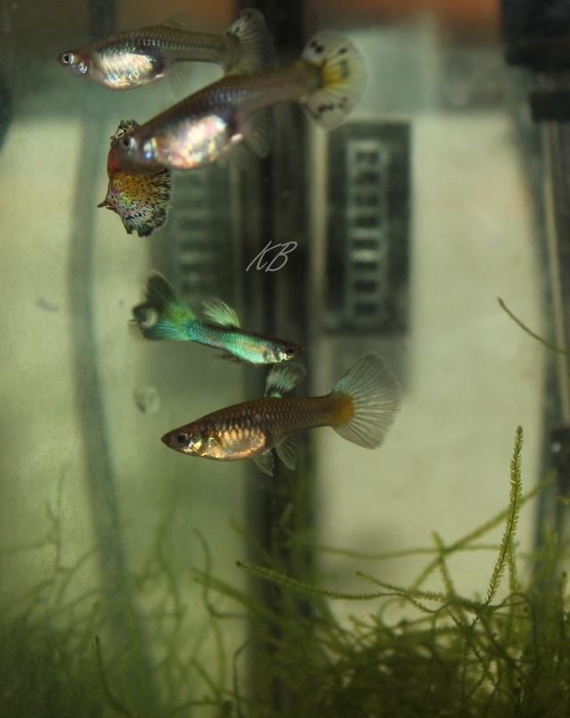 L'aquarium de Lolkaty 310