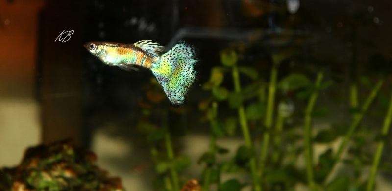 L'aquarium de Lolkaty 3310