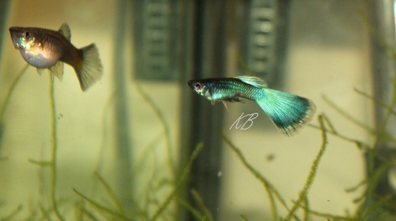L'aquarium de Lolkaty 3410