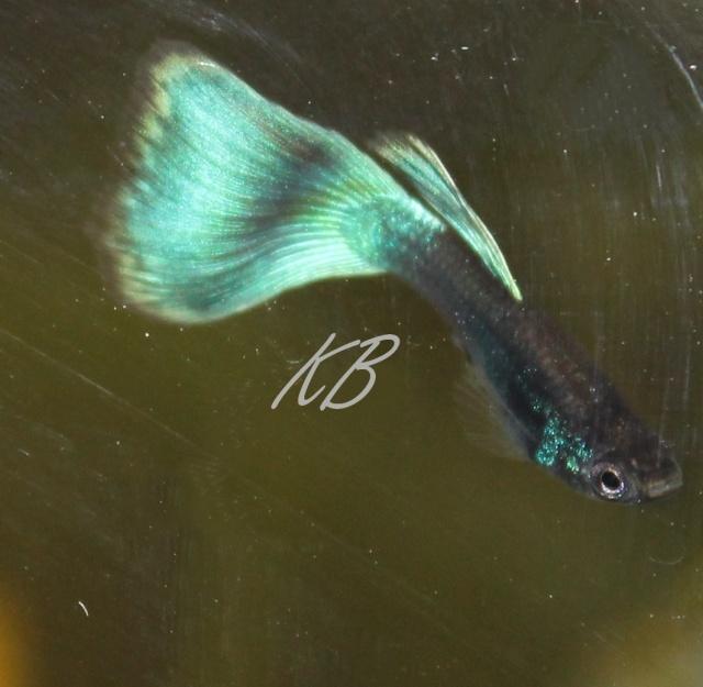 L'aquarium de Lolkaty 4810