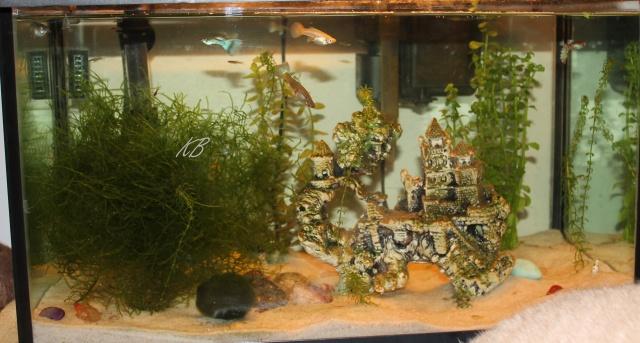 L'aquarium de Lolkaty 5910