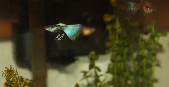 L'aquarium de Lolkaty 6010