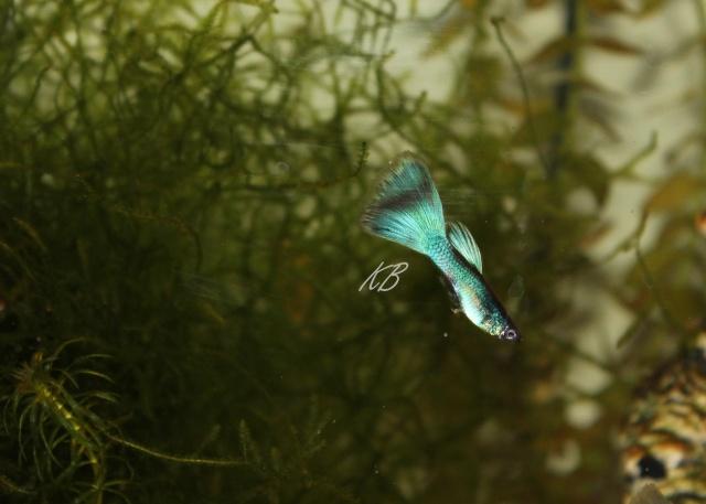 L'aquarium de Lolkaty 6510