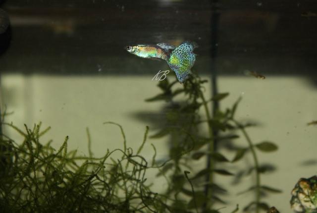 L'aquarium de Lolkaty 7510
