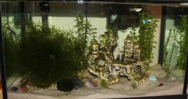 L'aquarium de Lolkaty Aqua_210