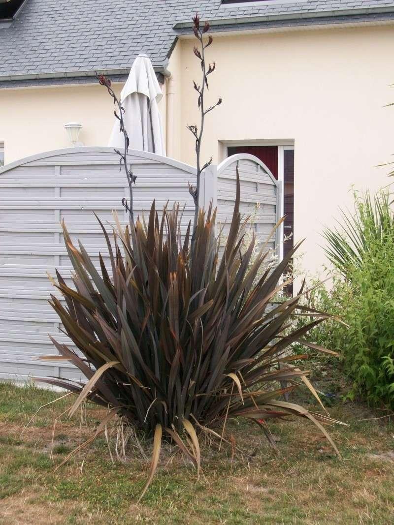 une pour le voisin [ résolu ] lin de Nouvelle Zélande 100_1015
