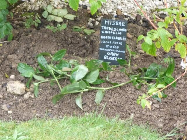 Contes Fantastiques du Jardin des Poetes. P1100610