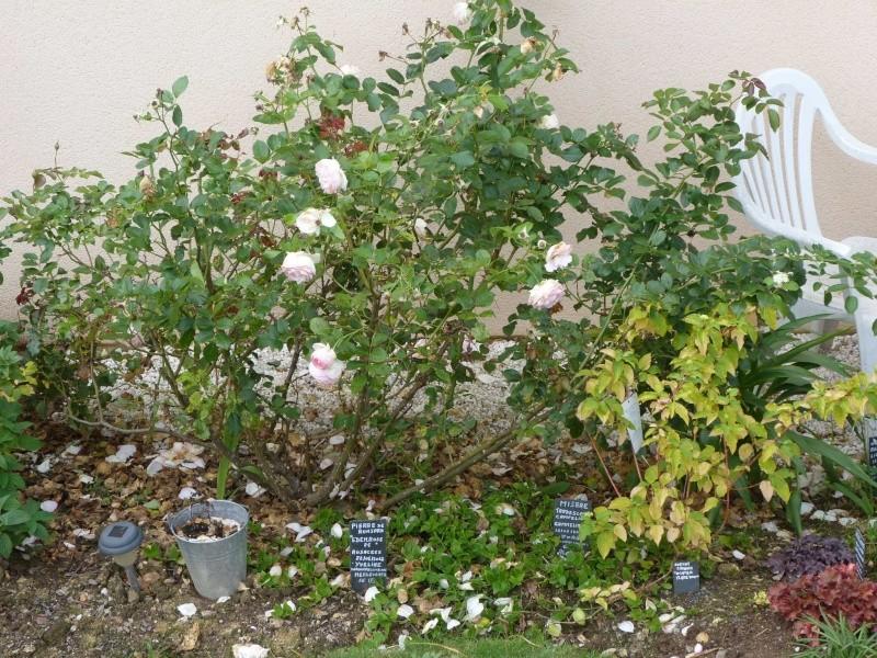 Album photo  du jardin des poëtes - Page 40 P1170683