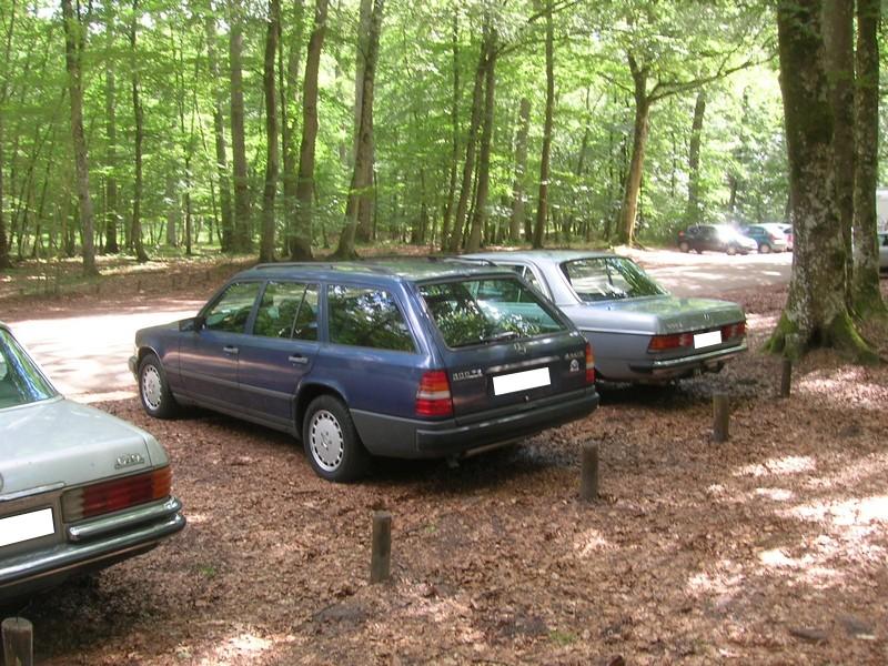 Fontainebleau 77 -  Dimanche 26 juin 2016 - Pique-nique familial en forêt de Barbizon Dscn9844
