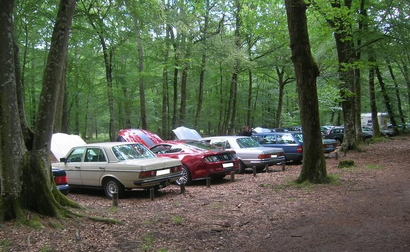 Fontainebleau 77 -  Dimanche 26 juin 2016 - Pique-nique familial en forêt de Barbizon Dscn9884