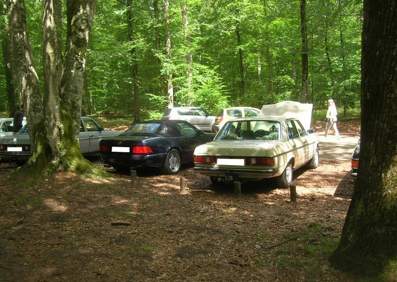 Fontainebleau 77 -  Dimanche 26 juin 2016 - Pique-nique familial en forêt de Barbizon Dscn9887