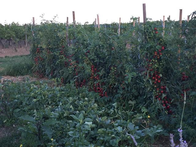 Jardinage en tout genre - Page 7 2015-012