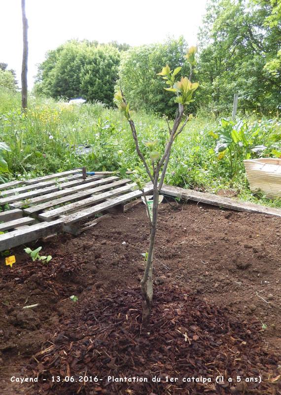 Plantation d'un arbre ! 2016-111