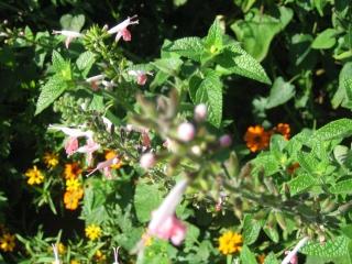 Liste graines et plants 2008 02910