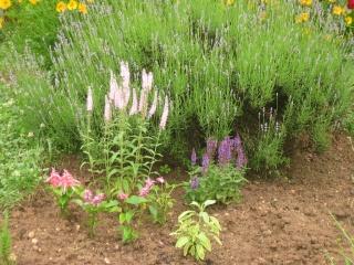 Liste graines et plants 2008 13_jui10