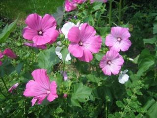 Liste graines et plants 2008 18_jui10