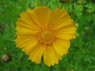 Liste graines et plants 2008 24_mai10