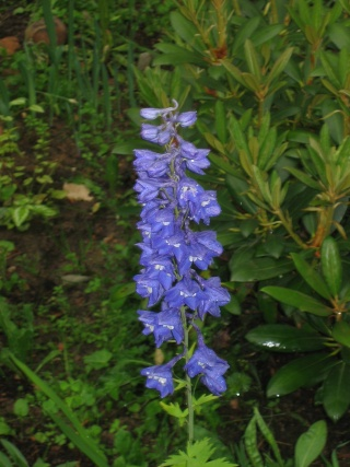 Liste graines et plants 2008 27_mai10