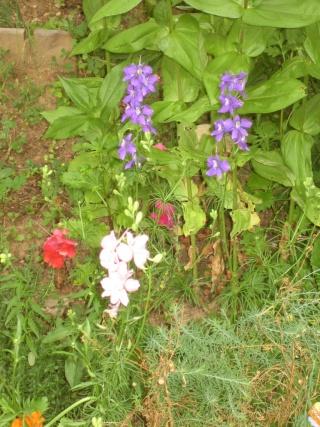 Liste graines et plants 2008 28_jui10
