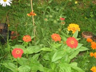 Liste graines et plants 2008 28_jui11
