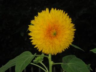Liste graines et plants 2008 Aout_210