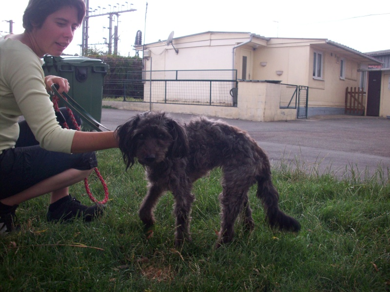 ruby 14 ans fourriere urgent  102_1421