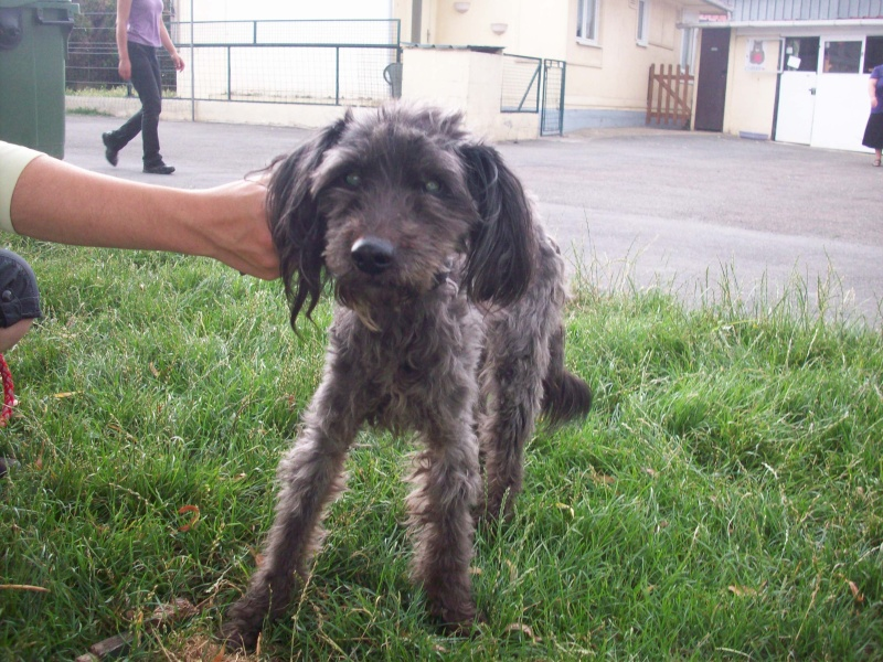 ruby 14 ans fourriere urgent  102_1514