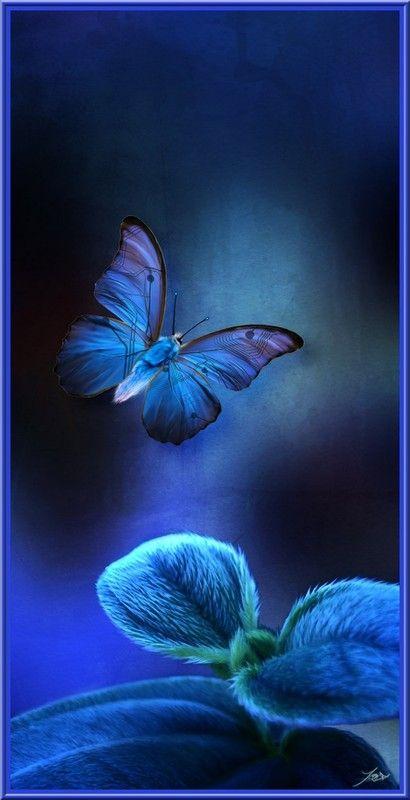 Nos amis les papillons (symbolique) - Page 2 Papill11