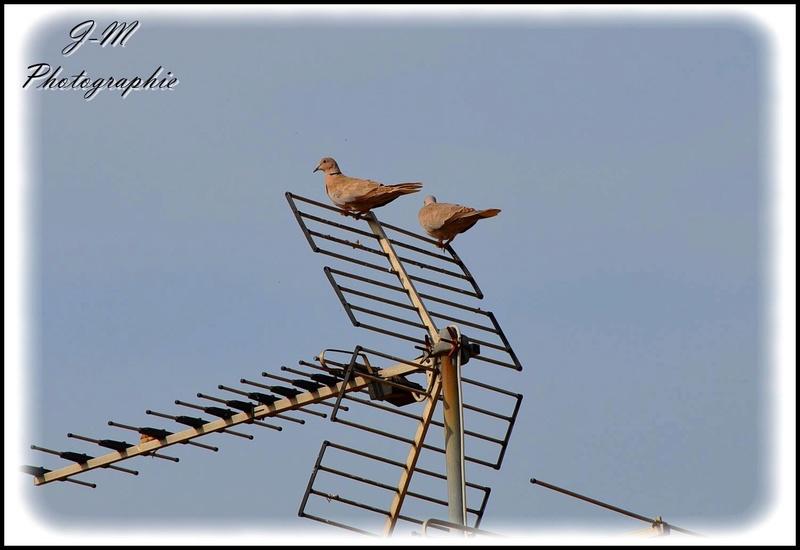 Les oiseaux de mon jardin Nikon_20