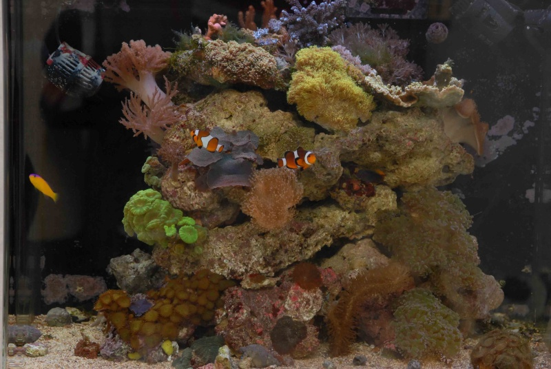 Le red sea 130 d'hopaline59 - Page 4 Dsc_0010