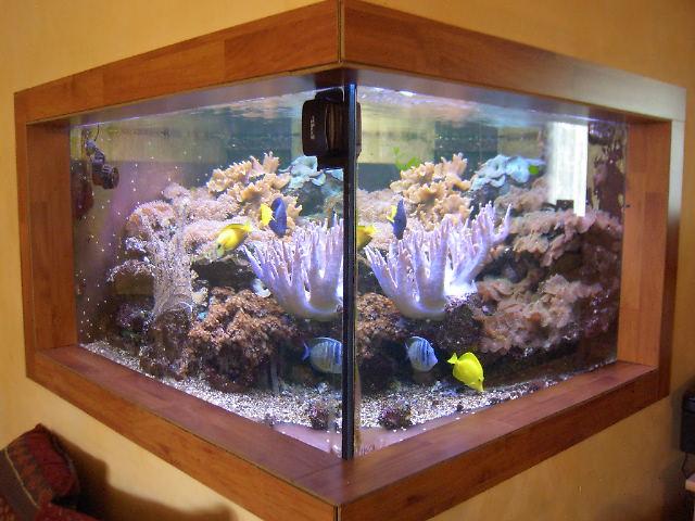 rampe led pour aquarium terrarium riparium vivarium Aquahe10