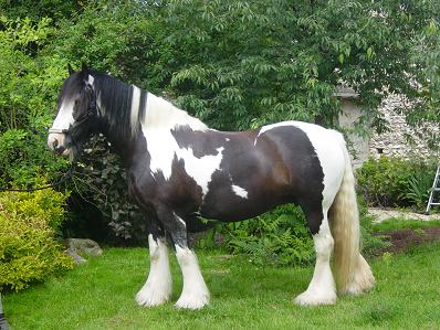 Chevaux inscrits au SIRE Sween10