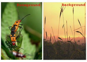 Tips n trik photogrpy Fgbg10