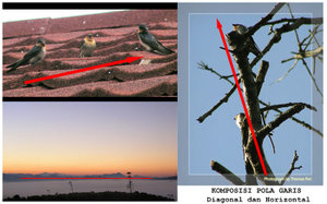 Tips n trik photogrpy Pola-g10
