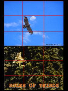Tips n trik photogrpy Rules310