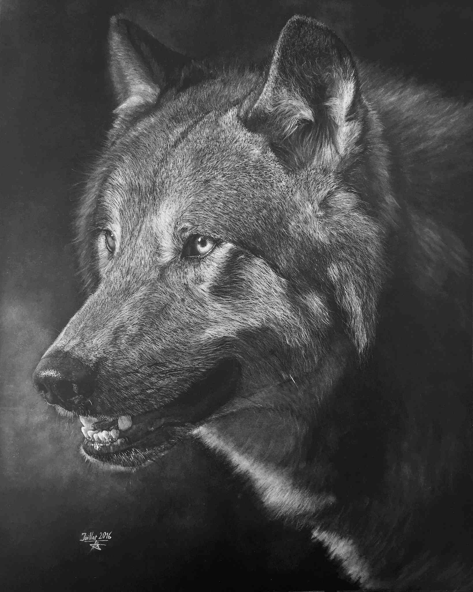 Loup 151_lo10