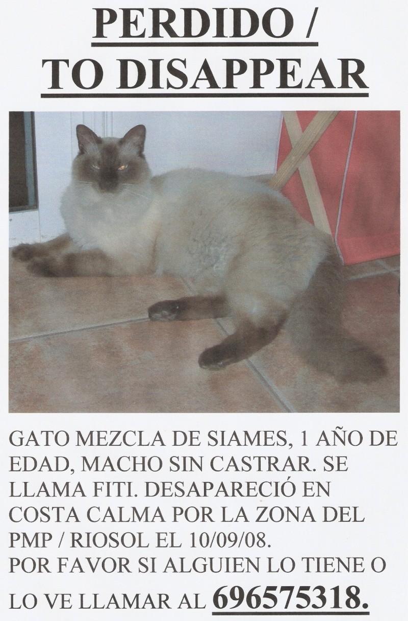 FITI, gato perdido en Fuerteventura Fiti_g10