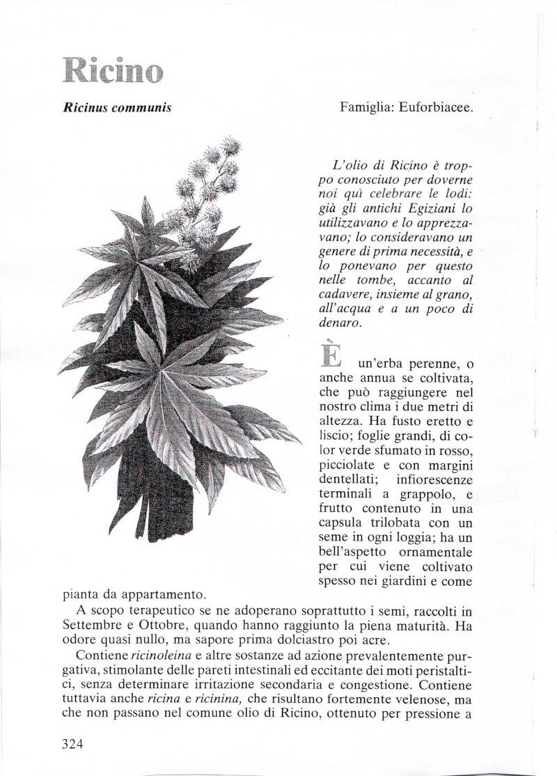 RICINO Ricino12