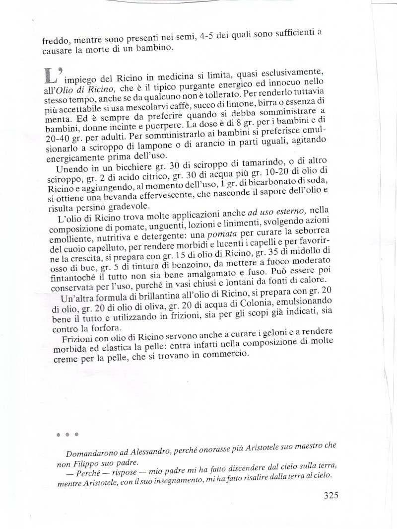 RICINO Ricino13
