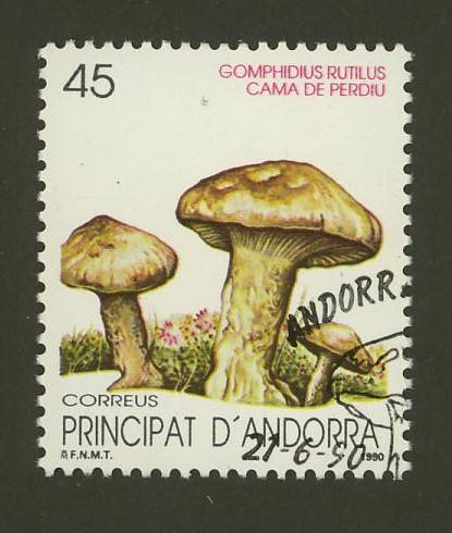 Pilze Andorr12