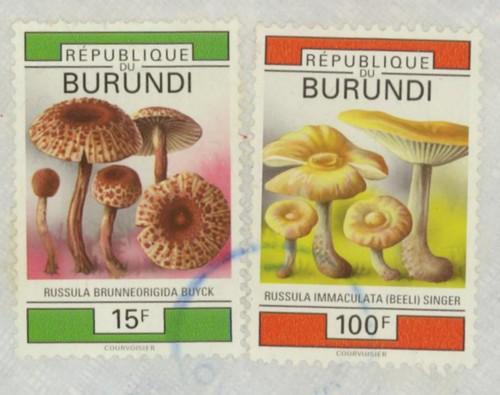 Pilze Burund10